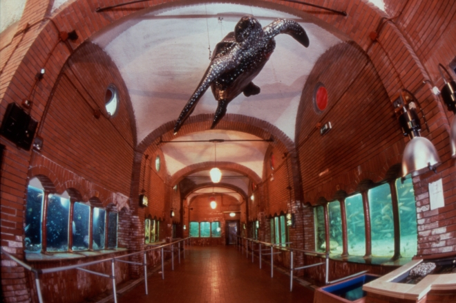Acquario Della Stazione Zoologica Di Napoli